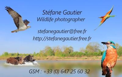 Sg Carte Visite Photographe Animalier Stfane Gautier