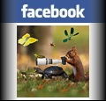My page Facebook
